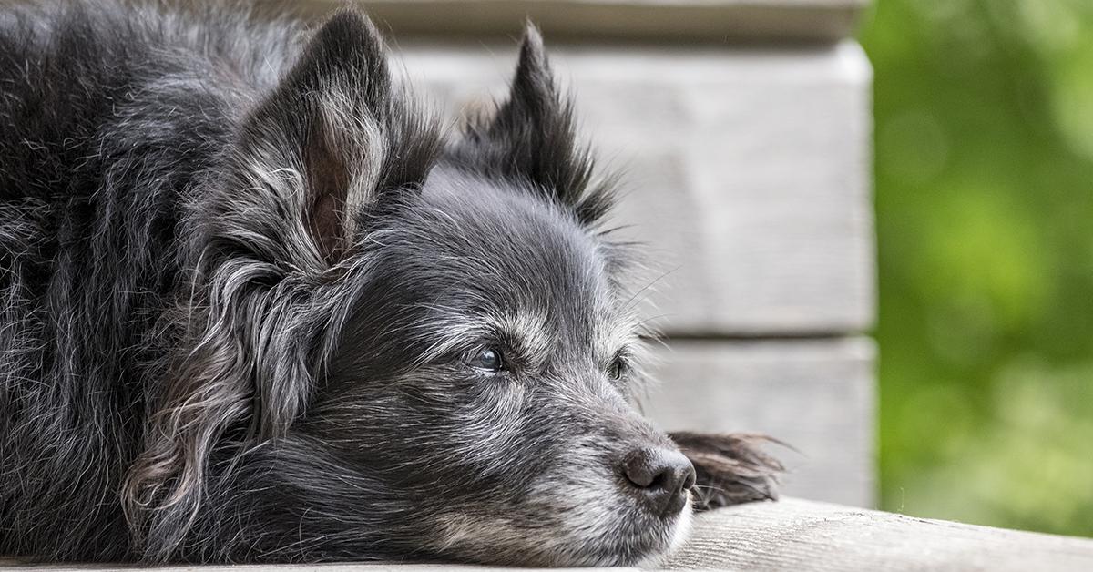Truffinade image a la une adopter vieux chien 1 - Adopter un vieux chien !