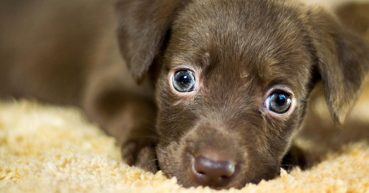 Truffinade image a la une adoption chiot 1 - L'adoption d'un chien ou d'un chiot, c'est un engagement, une responsabilité, de la sérénité… et beaucoup de bonheur !