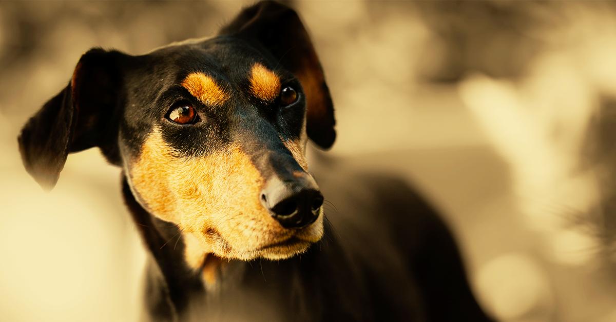 Truffinade image a la une besoins fondamentaux chien 1 - Les besoins fondamentaux du chien
