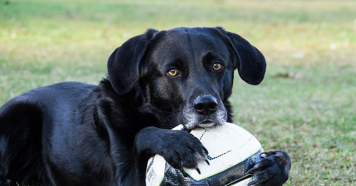 Truffinade image a la une lamour ne fait pas tout 1 - L'amour porté à son chien ne fait pas tout