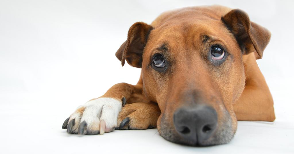 Truffinade image a la une lanxiete de sepration 1 1024x536 - Coach en éducation canine positive et comportement canin