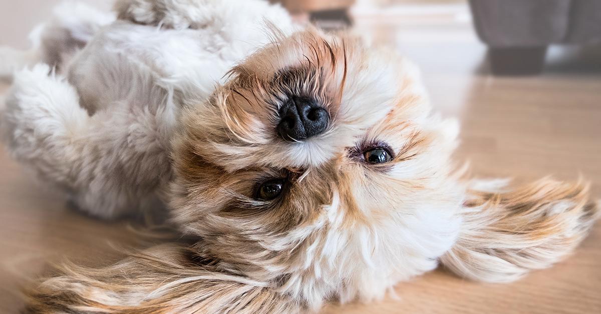 Truffinade image a une plasticite du chien 1 - La plasticité du chien