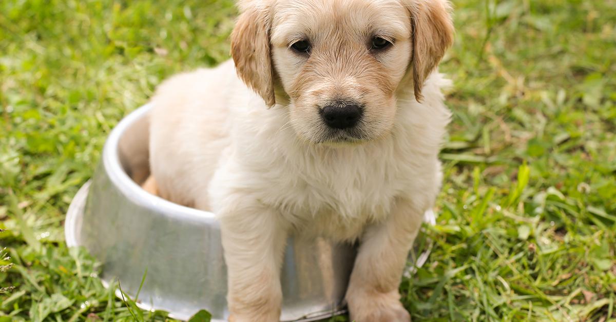 Truffinade image a une propreté du chien 1 - La propreté