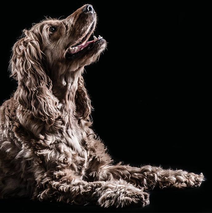 truffinade chien01 - Coach en éducation canine positive et comportement canin