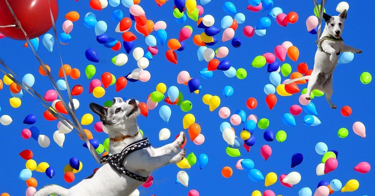 chien divertissement - Comment divertir un chien ?