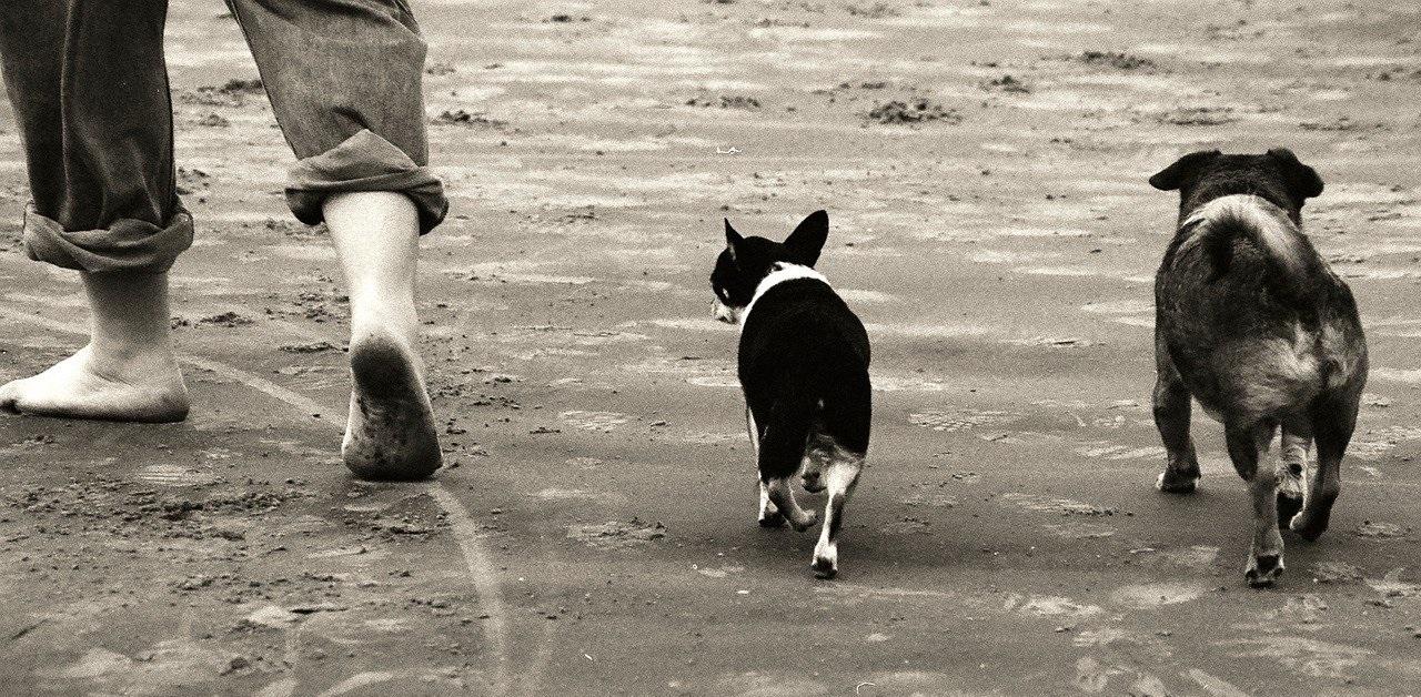 truffinade conseils marche au pied - Truffi-conseils-covid-19-2 / Quelques conseils pour la marche au pied