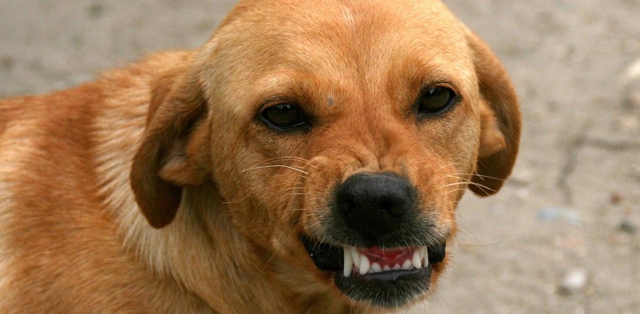 truffinade environnement agressivite - Et si c'était l'environnement qui rendait un chien agressif ?