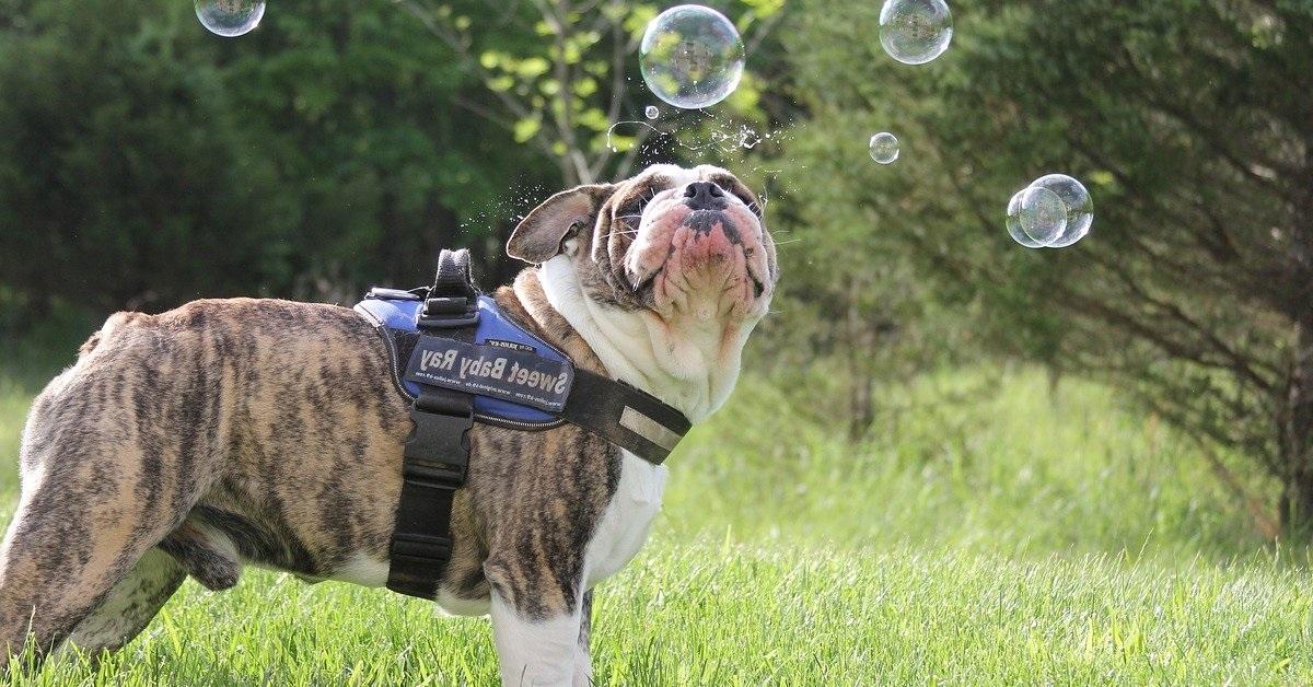 truffinade bulle de tranquillite du chien - Truffi-conseils-covid-19-5 / La nécessaire bulle de tranquillité du chien