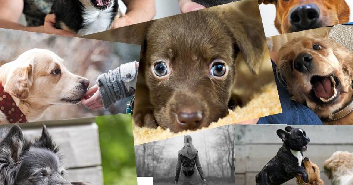 truffinade les bons gestes pour adopter un chien - Truffi-conseils-covid-19-12 / Les bons et premiers gestes pour adopter un chien