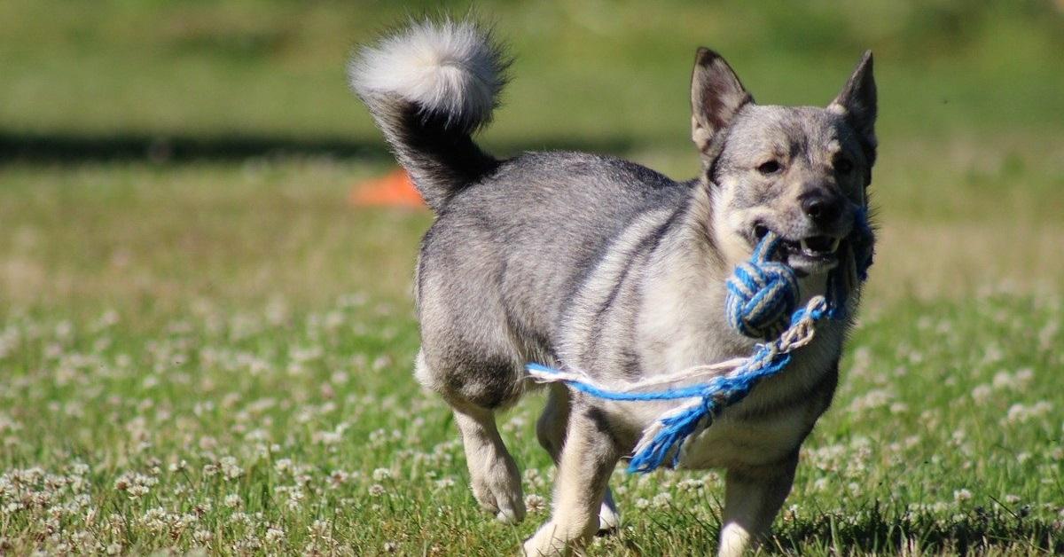truffinade quels jouets pour occuper un chien - Truffi-conseils-covid-19-7 / Quels jouets pour occuper un chien ?
