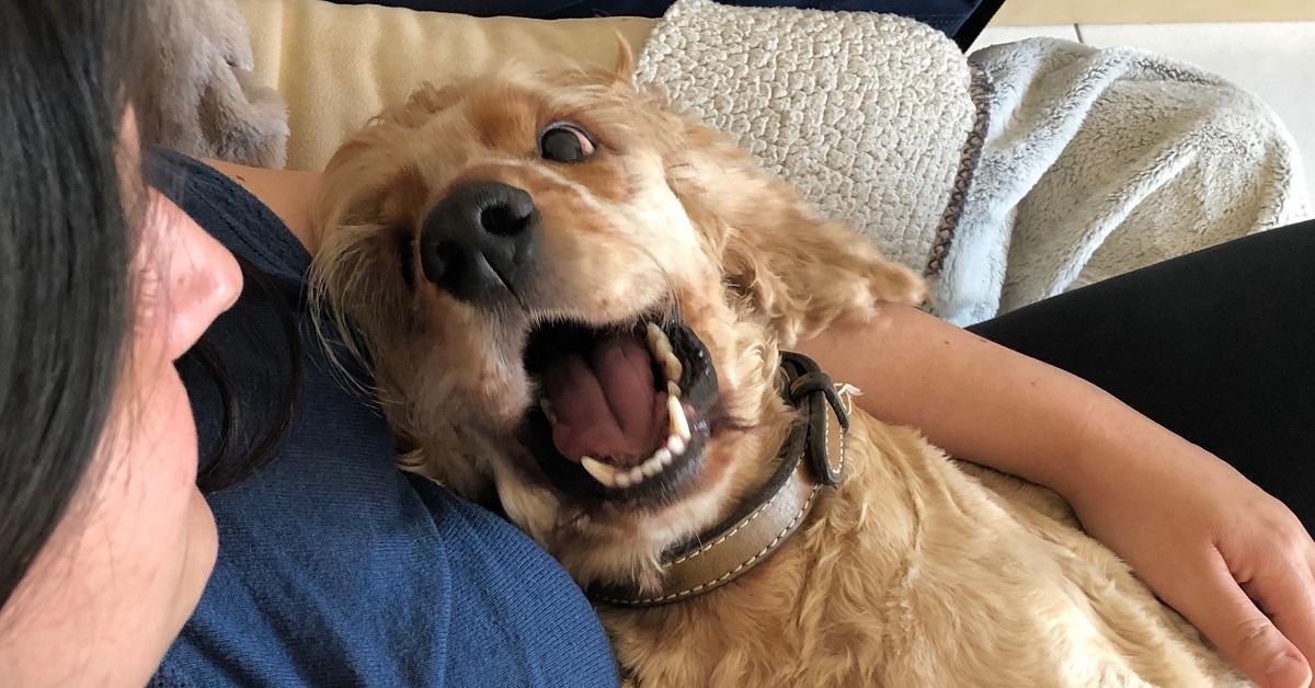 truffinade un bon chien - Truffi-conseils-covid-19-10 / Un bon chien