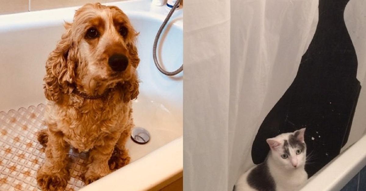truffinade lucky plume baignoire - Truffi-conseils-Covid-19-17 / Le chien, le Covid-19 et la santé