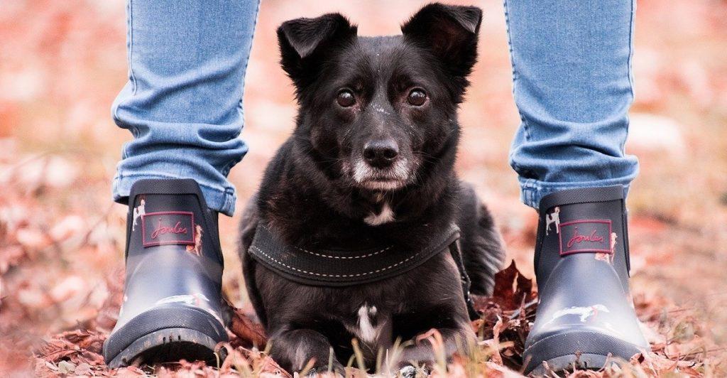 truffinade est ce que mon chien m aime 1 1024x532 - Actualités et conseils