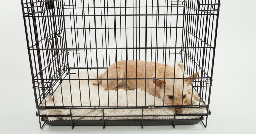 truffinade cage ou pas cage 1024x536 - Actualités et conseils