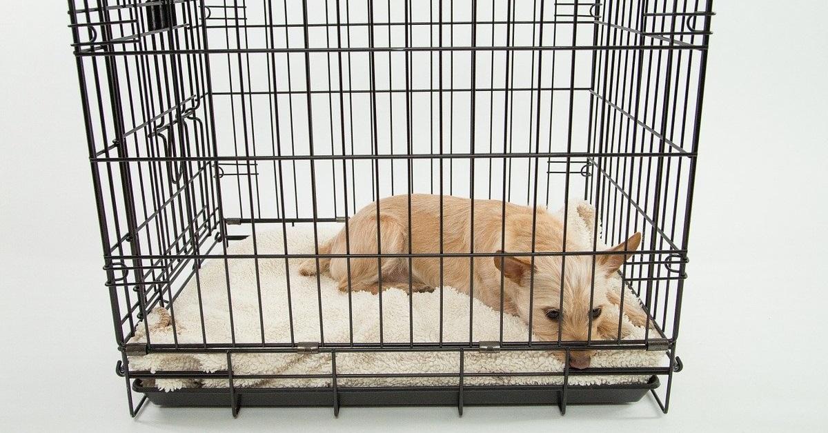 truffinade cage ou pas cage - Cage ou pas cage ?