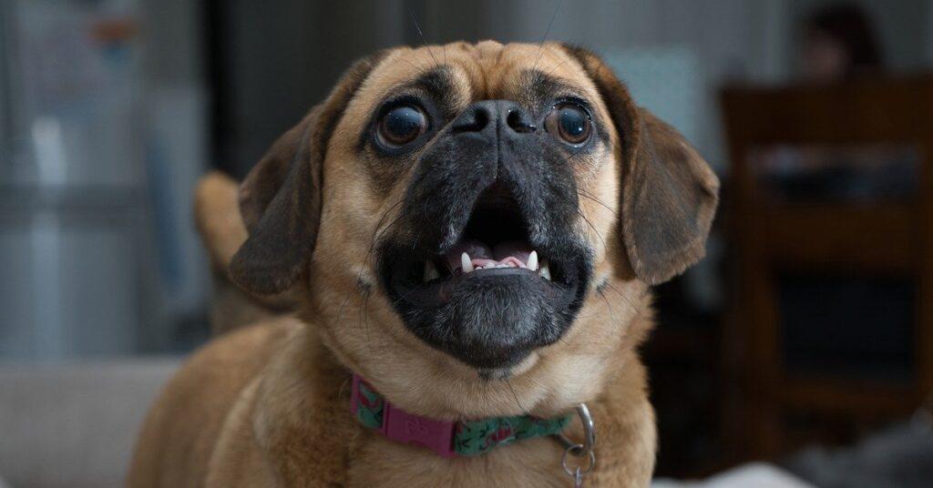 truffinade un chien qui pleure en votre absence 1024x536 - Actualités et conseils