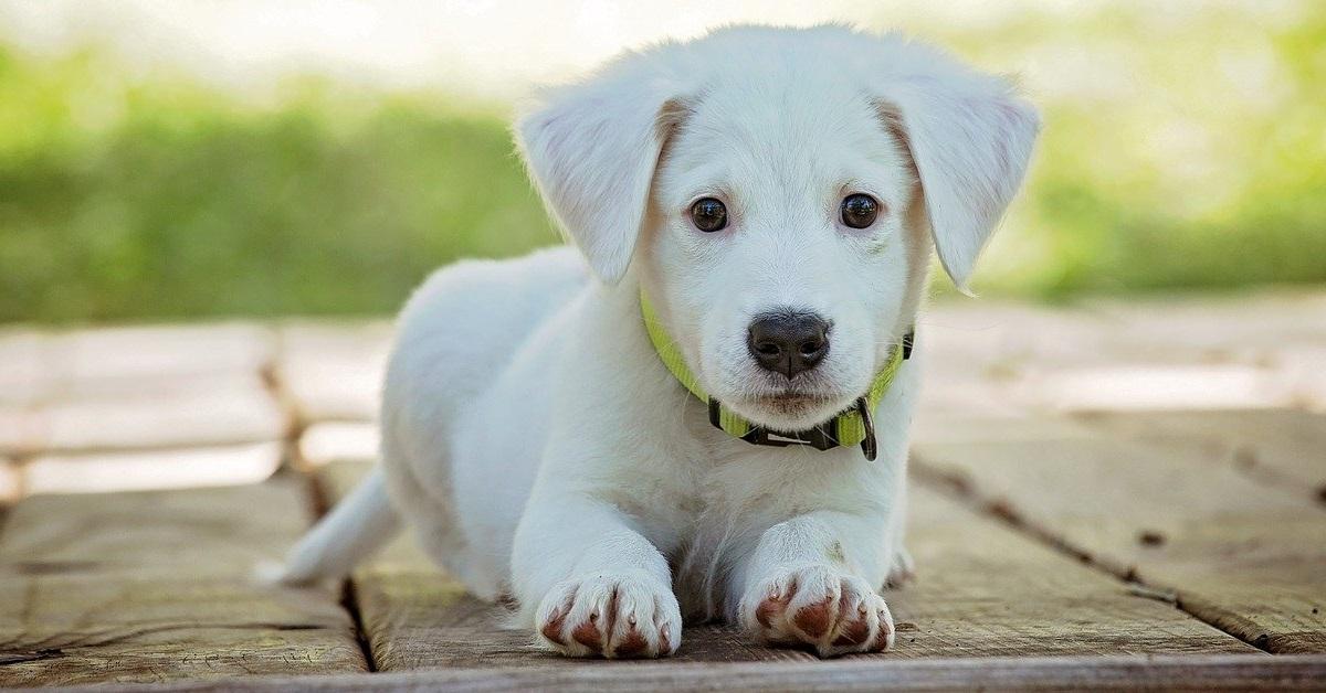 truffinade un qui ne sait pas attendre - Un chien qui ne sait pas attendre sans bouger