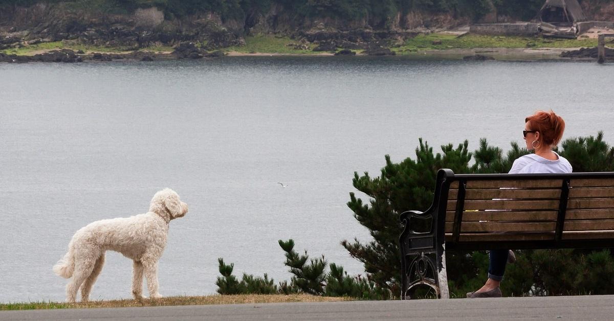 truffinade un chien qui n aime pas les calins - Un chien qui n'aime pas les câlins