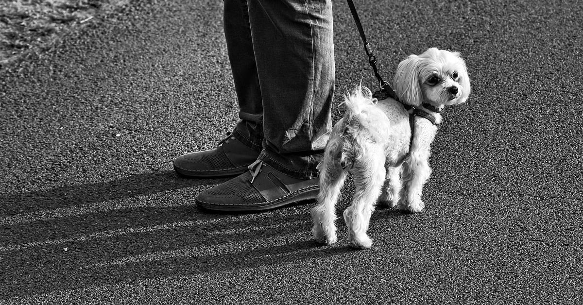 truffinade un chien qui n ecoute pas son chien - Un chien qui n'écoute pas son humain