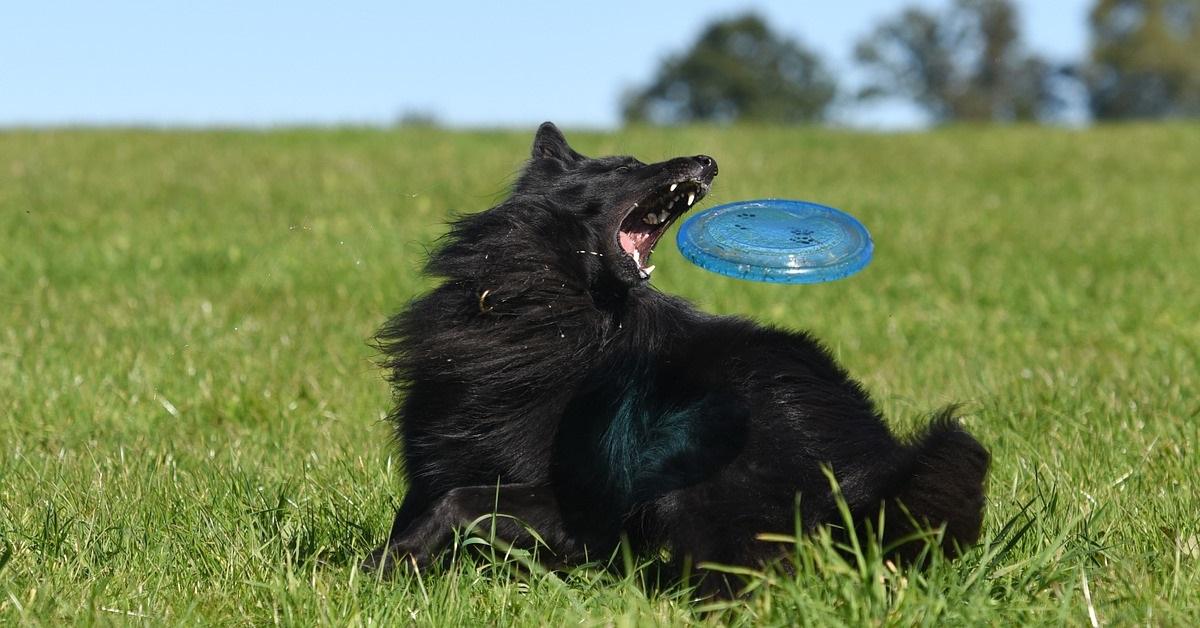 truffinade un chien qui poursuit et mordille ce qui lui passe devant le nez - Un chien qui poursuit et mordille ce qui lui passe devant le nez