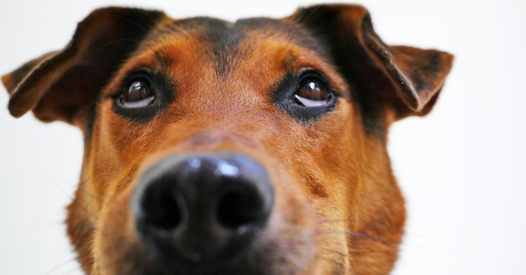 Truffinade image a la une fonction dun chien 1 1024x536 - Actualités et conseils