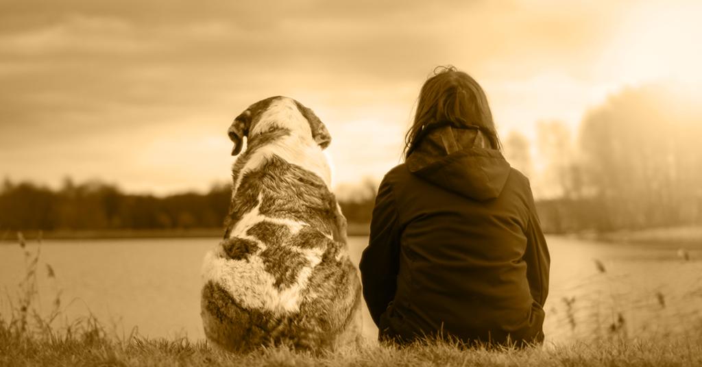 Truffinade image a la une mon chien mon ami 1 1024x536 - Actualités et conseils