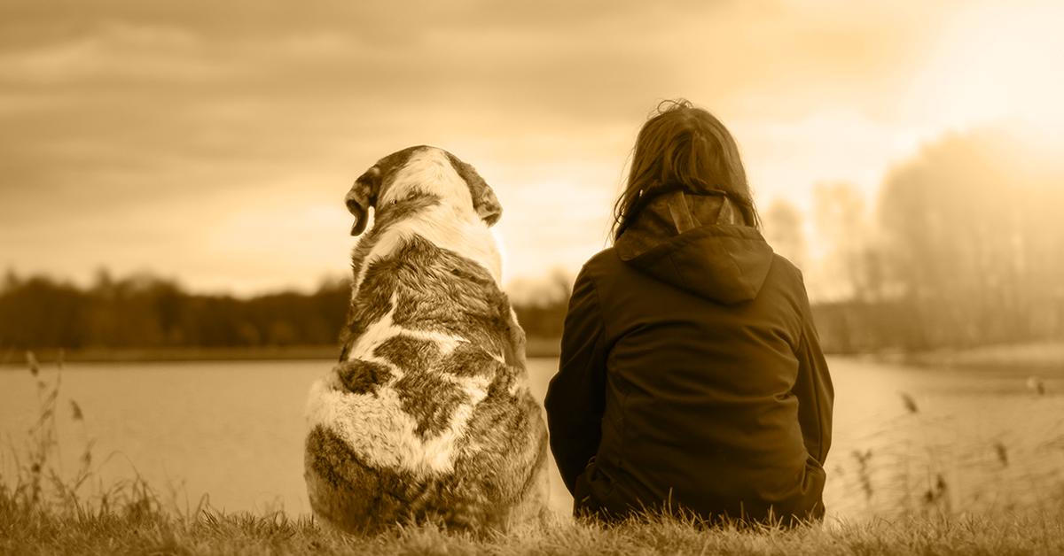 Truffinade image a la une mon chien mon ami 1 - Mon chien, mon ami...