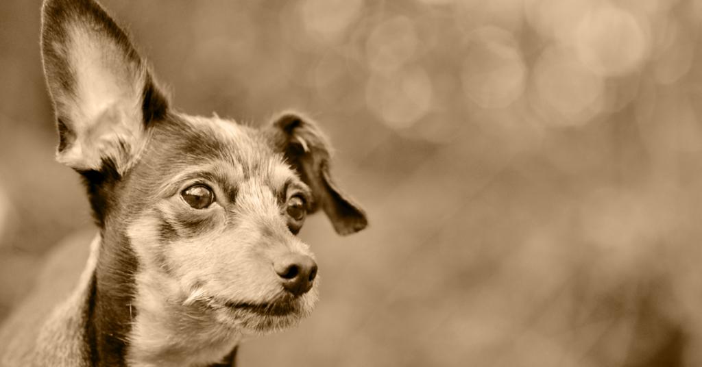 Truffinade image a la une promener chien sourd 1024x536 - Actualités et conseils