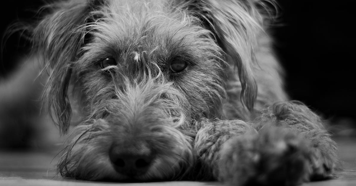 Truffinade image a lenvironnemnt chien 1 - L'environnement d'un chien