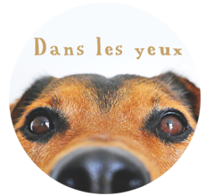 Truffinade yeux chien macro rond 500X300 300x276 - L'agressivité d'un chien