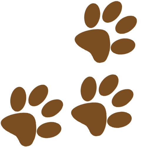 picto pas 01 - La plasticité du chien