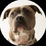 pourquoi quand chien categorie 1 150x150 - Pourquoi, Quand ?