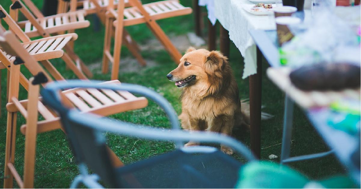 truffinade chien table - Le vol