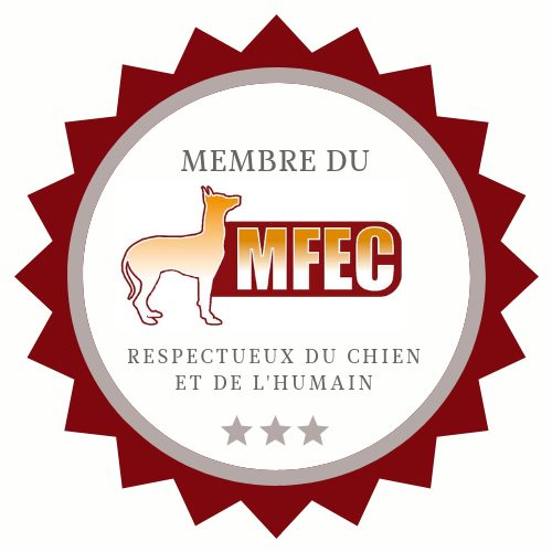 truffinade MFEC - Coach en éducation canine positive et comportement canin