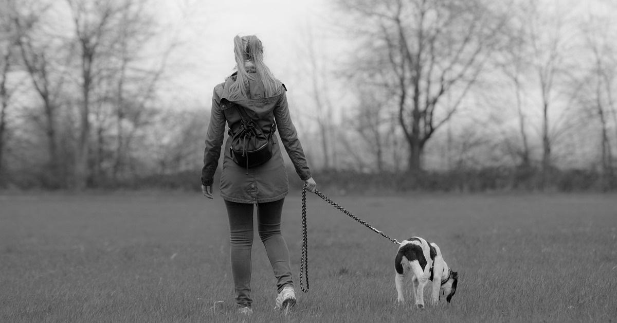 truffinade accessoires - Les accessoires de votre chien !