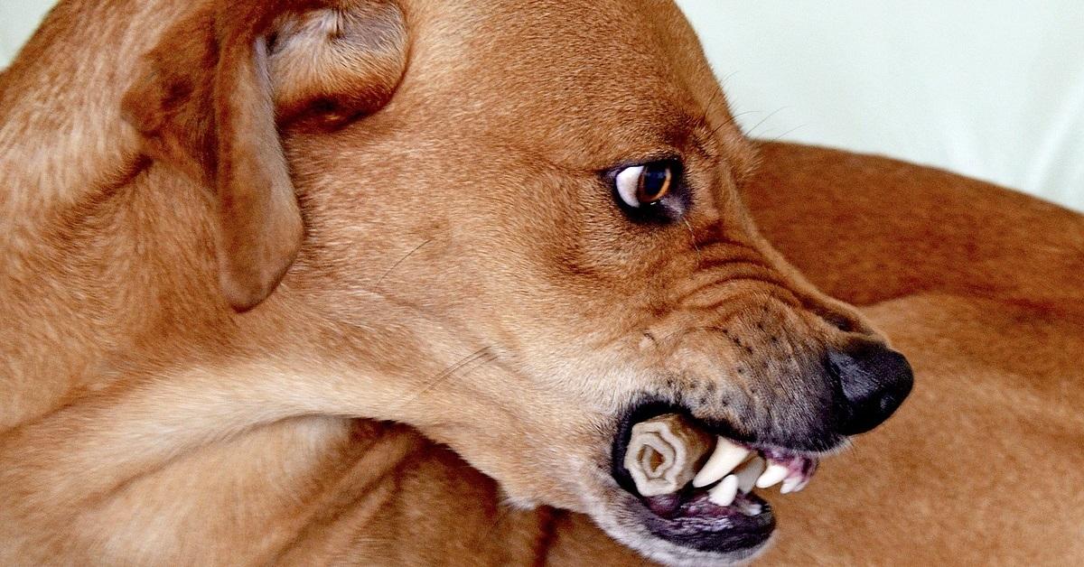 truffinade grognements - Savoir comprendre son chien