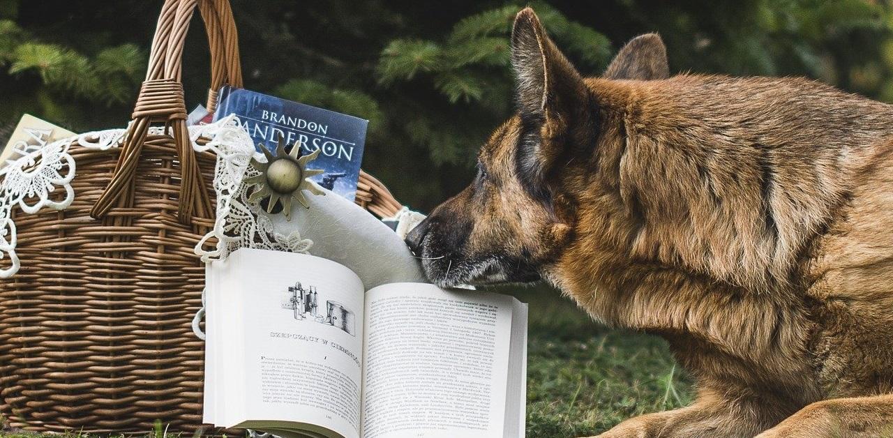 truffinade age education - Quel est le meilleur âge pour éduquer un chien ?