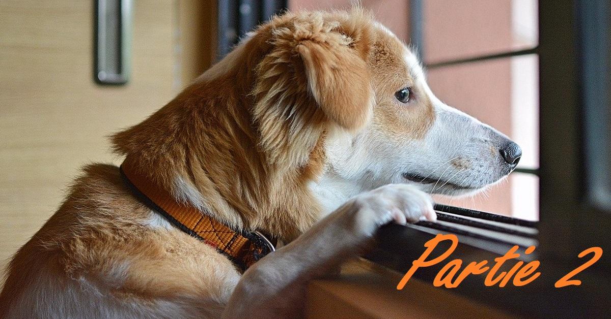 Truffinade deconfinement partie 2 - Truffi-conseils-covid-19-15 / Les risques du déconfinement pour votre chien - partie 2