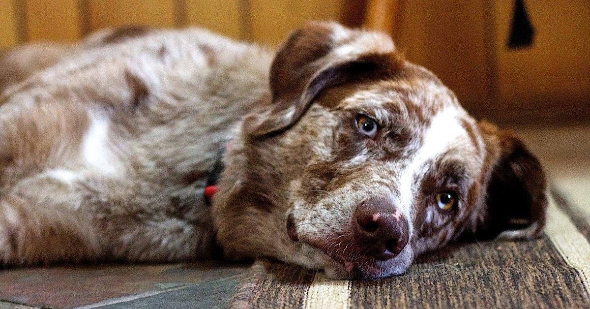 truffinade importance de rester serein avec son chien - Truffi-conseils-covid-19-8 / L'importance de rester serein avec son chien !
