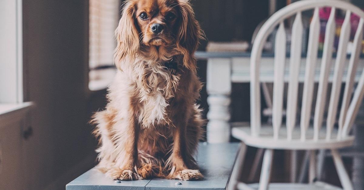 truffinade pourquoi mon s excite quand je l ignore - Pourquoi mon chien s'excite quand je l'ignore ?