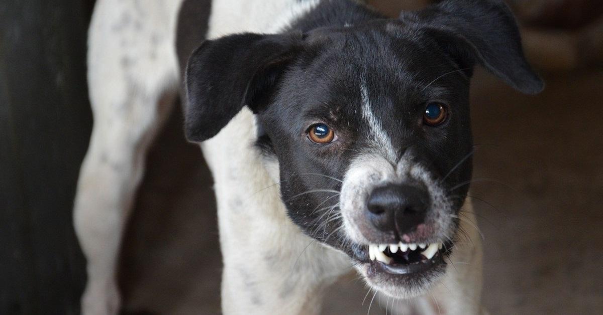 truffinade un chien qui grogne en voyant ses congeneres - Un chien qui grogne sur un congénère