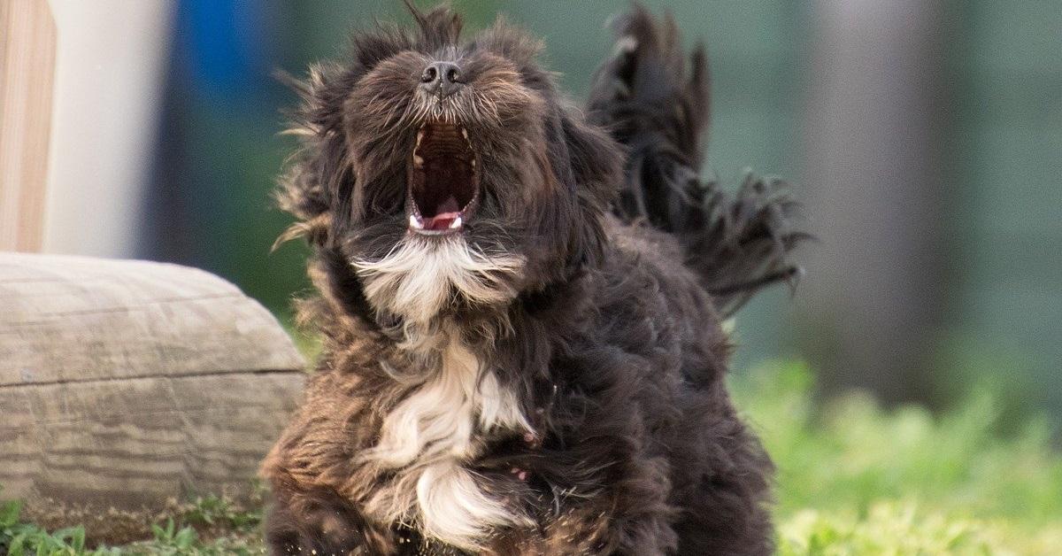 truffinade un chien qui aboie - Un chien qui aboie