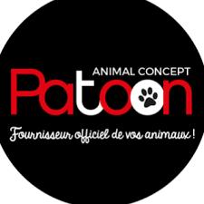 patoon - Coach en éducation canine positive et comportement canin