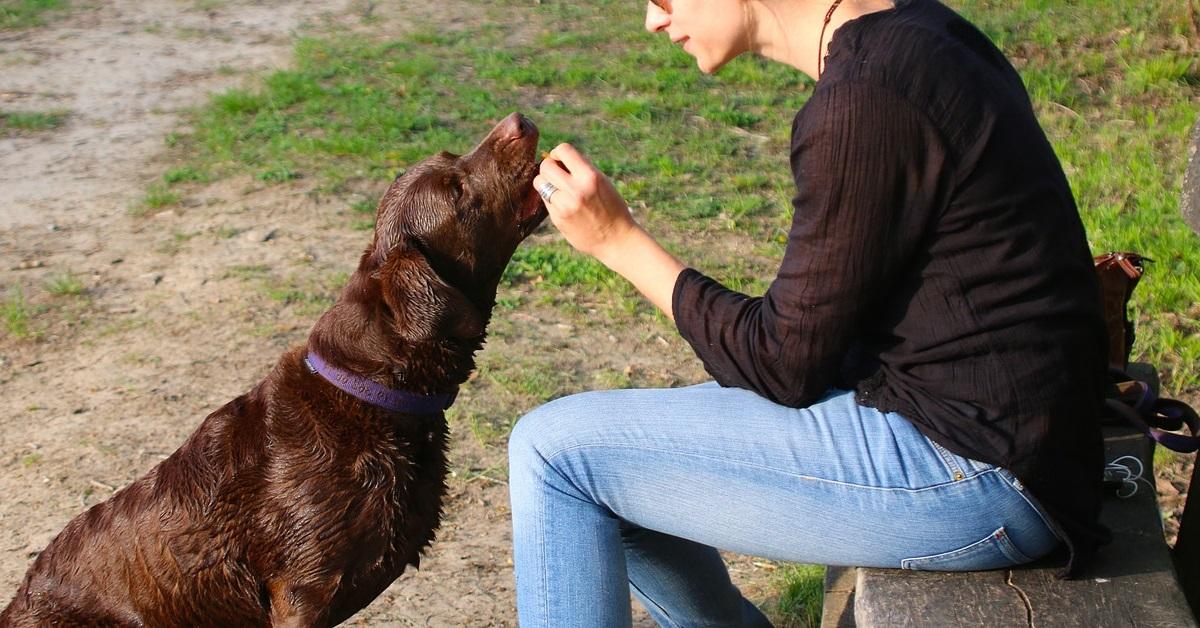 truffinade un chien qui recoit gratuitement des friandises - Un chien qui reçoit gratuitement des friandises