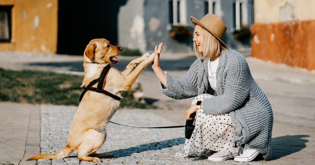 truffinade un chien qui sait tourner roule et faire le mort 1024x536 - Actualités et conseils